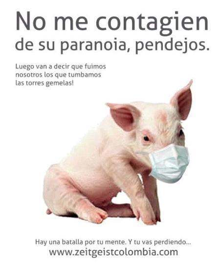 Porc gripa porcina