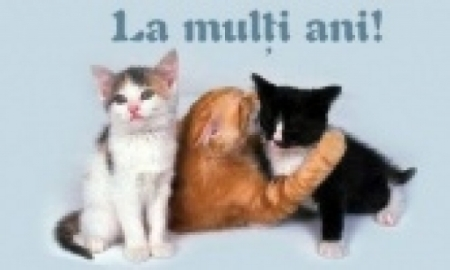 pisici la multi ani pozeleonline.ro