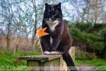 Olanda pisica