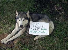 Rosia Montana catel realit.net